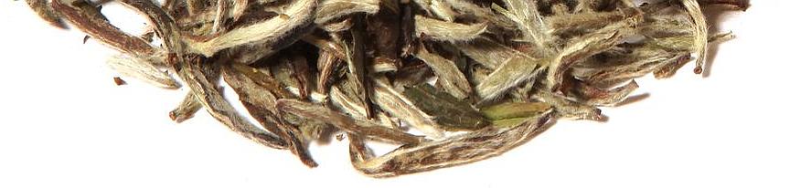 Weißer Tee Raritäten China