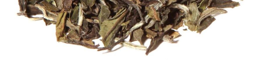 Weißer Tee Spezialitäten