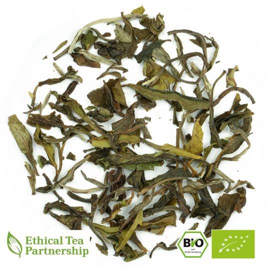 Weißer Tee DARJEELING PAI MU TAN PREMIUM ORGANIC BIO von alveus® Rarities bei tee-design.eu im Online-Shop kaufen.
